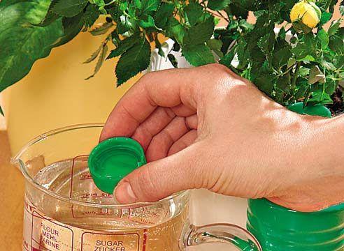 Простые и действенные способы удобрения домашних растений