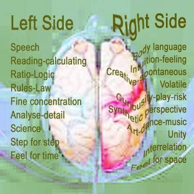 left side brain functions diagram harley turn signal wiring and right of the education