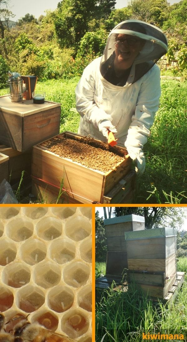 872 best Bees images on Pinterest Bees, Honey and Bee keeping - fresh apiary blueprint examples