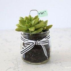 Succulant gift idea