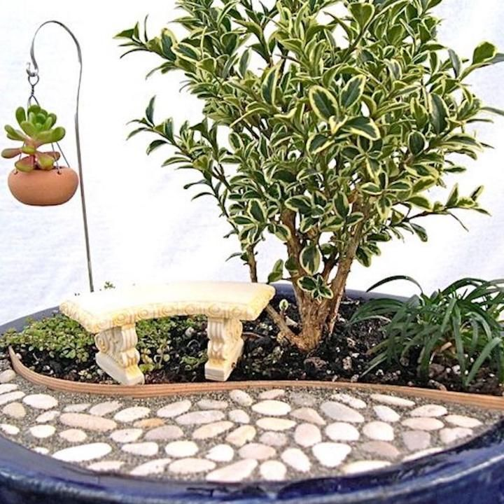 https://twogreenthumbs.com/collections/all/products/variegated-english-boxwood-buxus-sempervirens-variegata