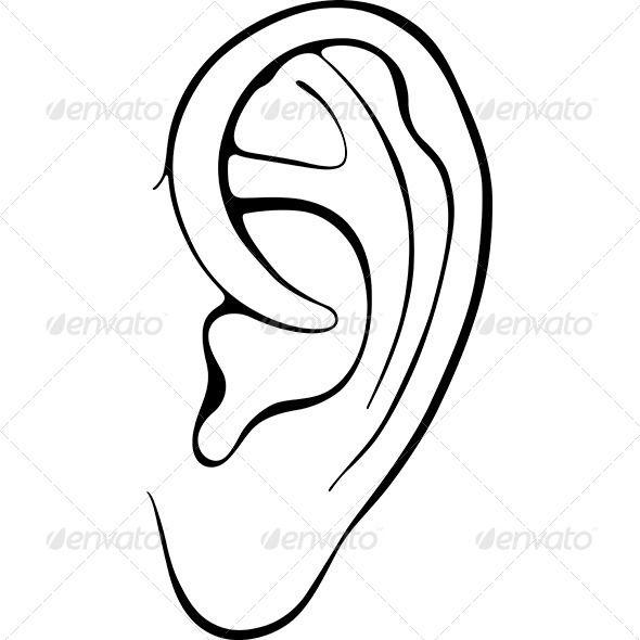 Best 25 Human Ear Ideas On Pinterest