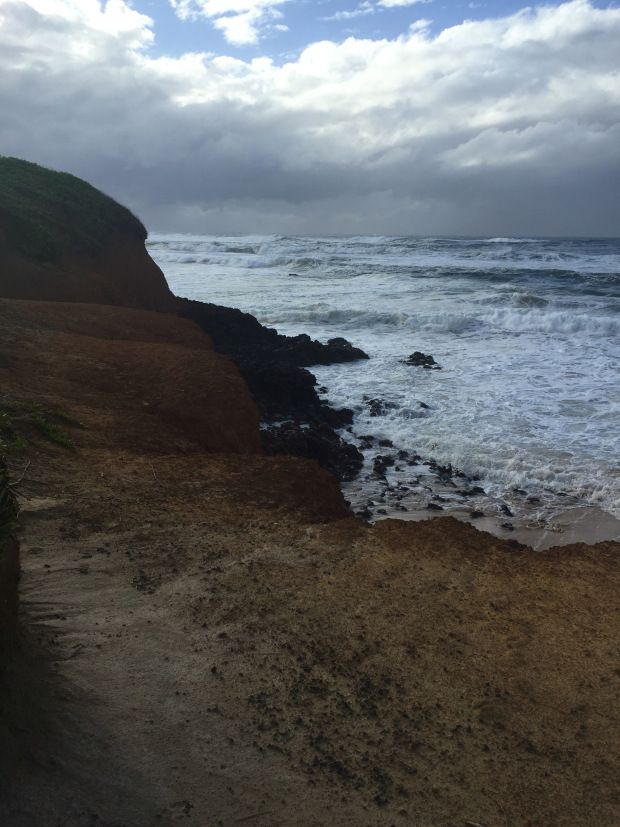 Long Reef Headland  – An Orchid's View