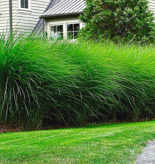 Delightful Landscape Design   Garden Designer   Garden Ideas  Jeddah · Sichtschutz  PflanzenSichtschutz ... Pictures Gallery