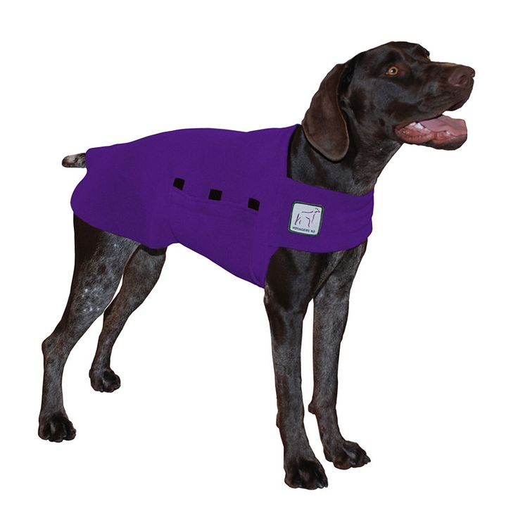 Purple German Shorthaired Pointer GSP Dog Tummy Warmer, great for warmth, anxiety and laying with our dog rain coat. High performance material. Made in the USA.