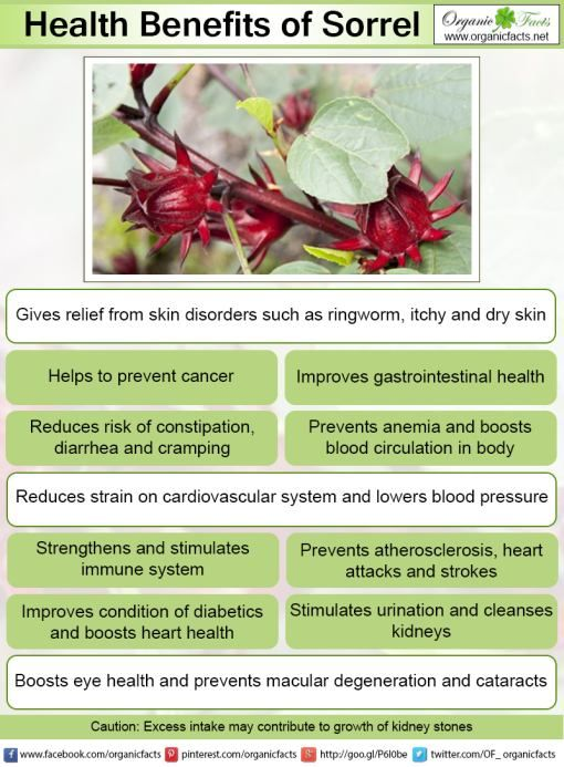 Some Of The Health Benefits Of Sorrel Include Its Ability