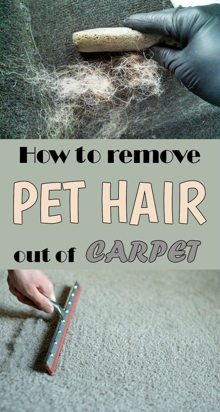 How to remove pet hair out of carpet - CleaningInstructor.com