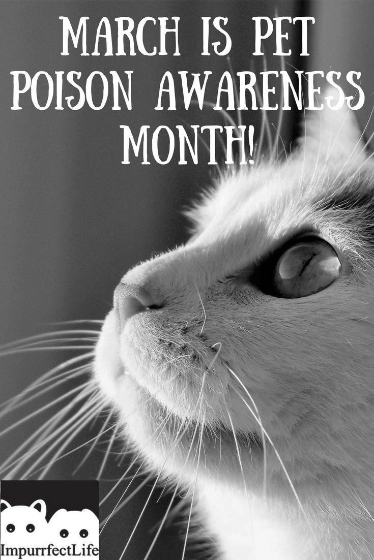 March Is Pet Poison Awareness Month Pets Cat Safe Plants