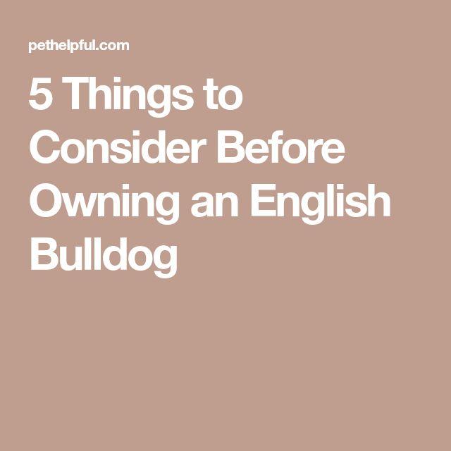 5 Things to Consider Before Owning an English Bulldog