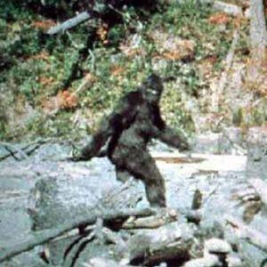Go Bigfoot Hunting