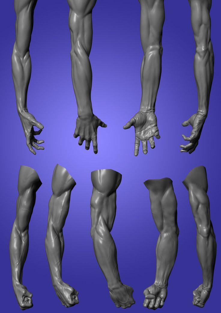 ZbrushCenterl- Anatomy study