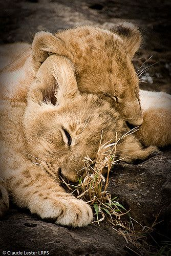 sweet dreams   claude lester   Flickr