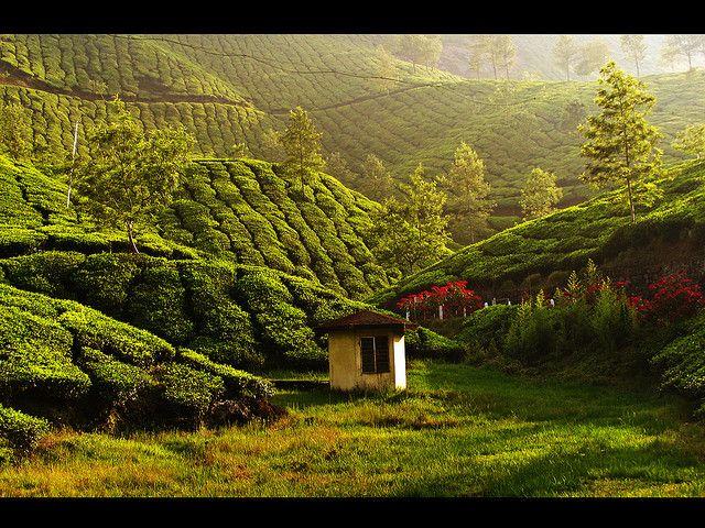 Tea estates, a new view