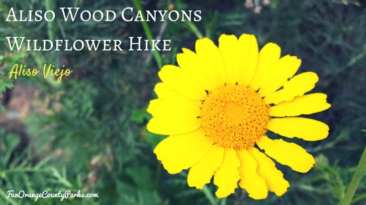 Aliso and Wood Canyons Wildflower Hike in Aliso Viejo