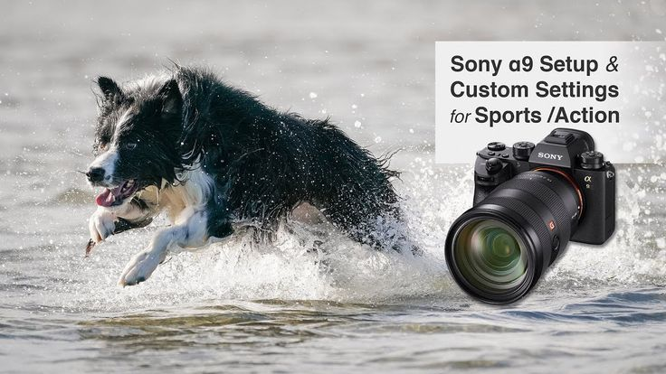 Sony Alpha A9 Setup Settings for Sports, Action and Wildlife