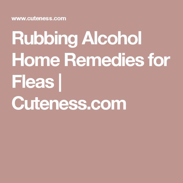 25 best ideas about home remedies fleas on pinterest flea spray for house dog flea treatment. Black Bedroom Furniture Sets. Home Design Ideas