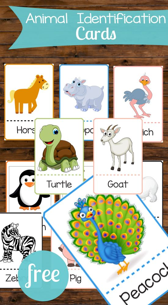 These animal identification cards are perfect for toddlers! There are so many ways these could be used for games and education!