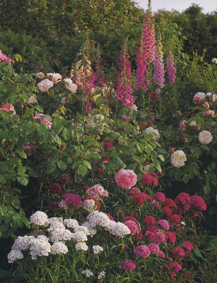 Garden Borders Inspiration : Images about pink herbaceous border inspiration on