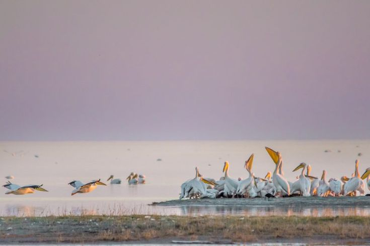 Pelicans roosting along the pans at the Nata Bird Sanctuary.Photo by Melanie van Zyl