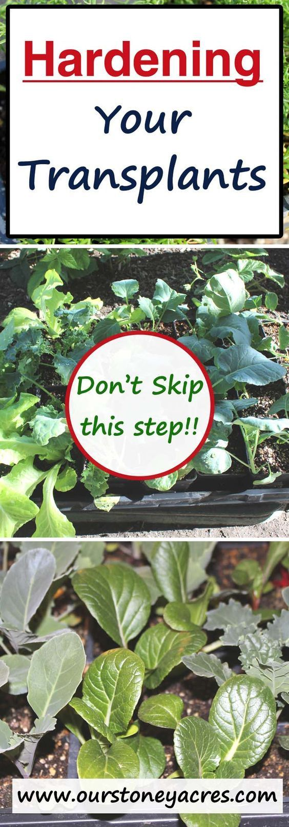 An important part of growing your own seedlings is hardening off your transplants. Dont skip this step or you risk loosing your transplants completely!