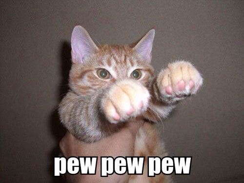 Funny Meme To Say Hello : 42 best cats images on pinterest cute kittens kitty cats and