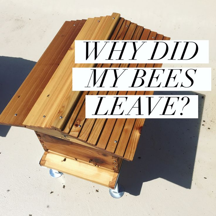 Why Did My Bees Leave?