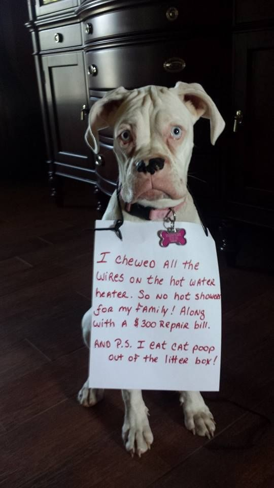 Dog Shame | I chewed all the wires on the hot water heater ...