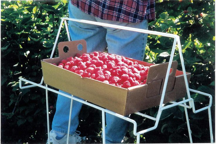 raspberry stand