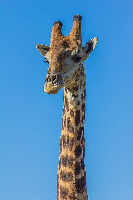 Kruger national park . South Africa