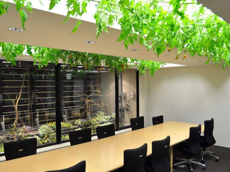 Urban farming - Pasona Group, Tokyo