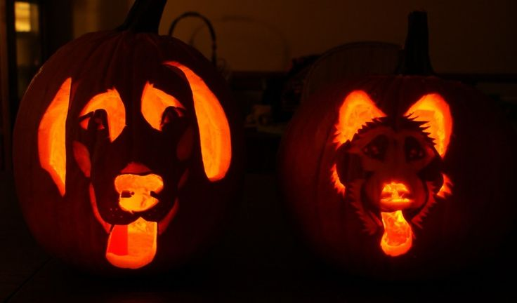 Accessories simple dog pumpkin carving pattern ideas