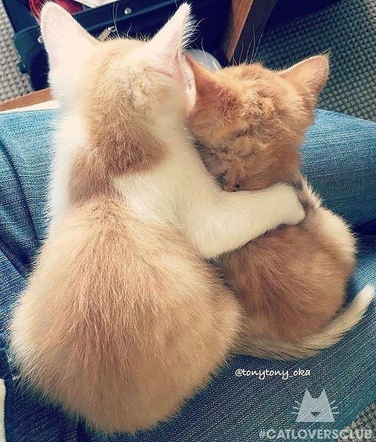 Preparati a una dose extra di tenerezza con queste foto di gattini e le loro mamme