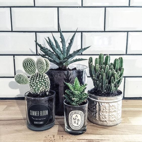 les 25 meilleures id es de la cat gorie cactus sur pinterest cactus plantes de cuisine et les. Black Bedroom Furniture Sets. Home Design Ideas