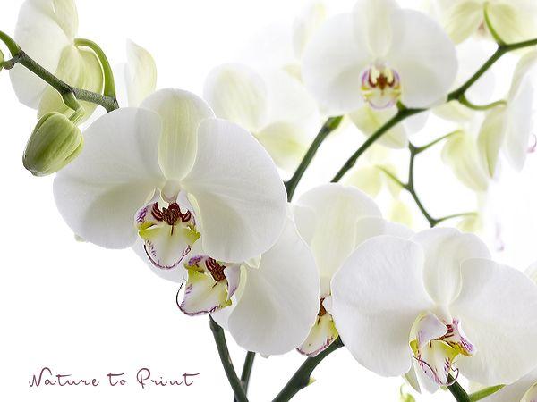 87 besten orchideen und exotische bl ten bilder auf pinterest exotische blumen exotische. Black Bedroom Furniture Sets. Home Design Ideas