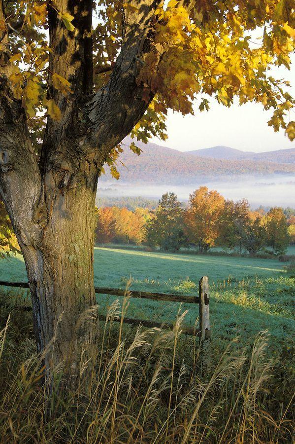 "seasonsofwinterberry: "" Autumn, Rutland County, Vermont """