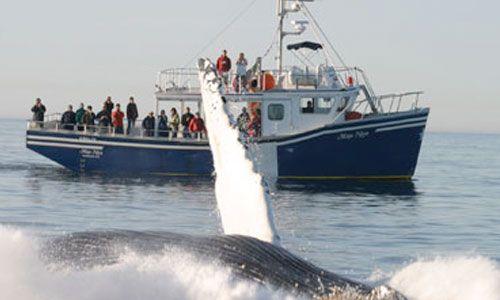 Mega Nova Whale Watching Tours in Nova Scotia