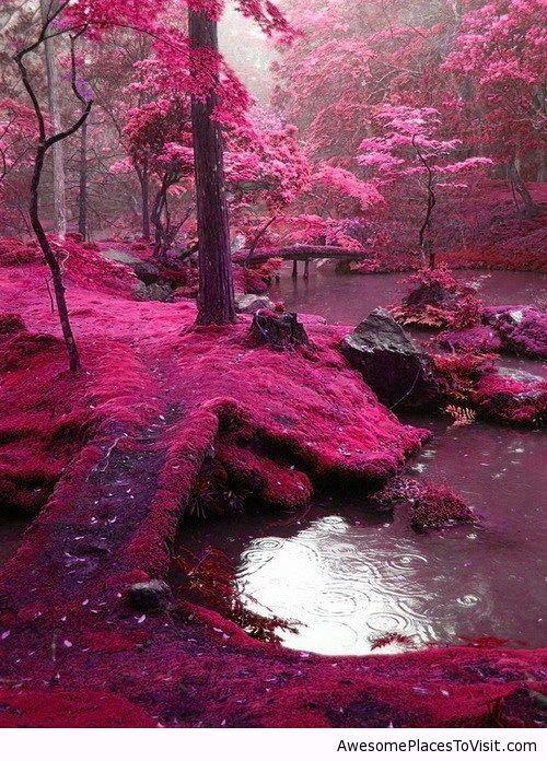 Bridges Park, Ireland | Awesome place to visit