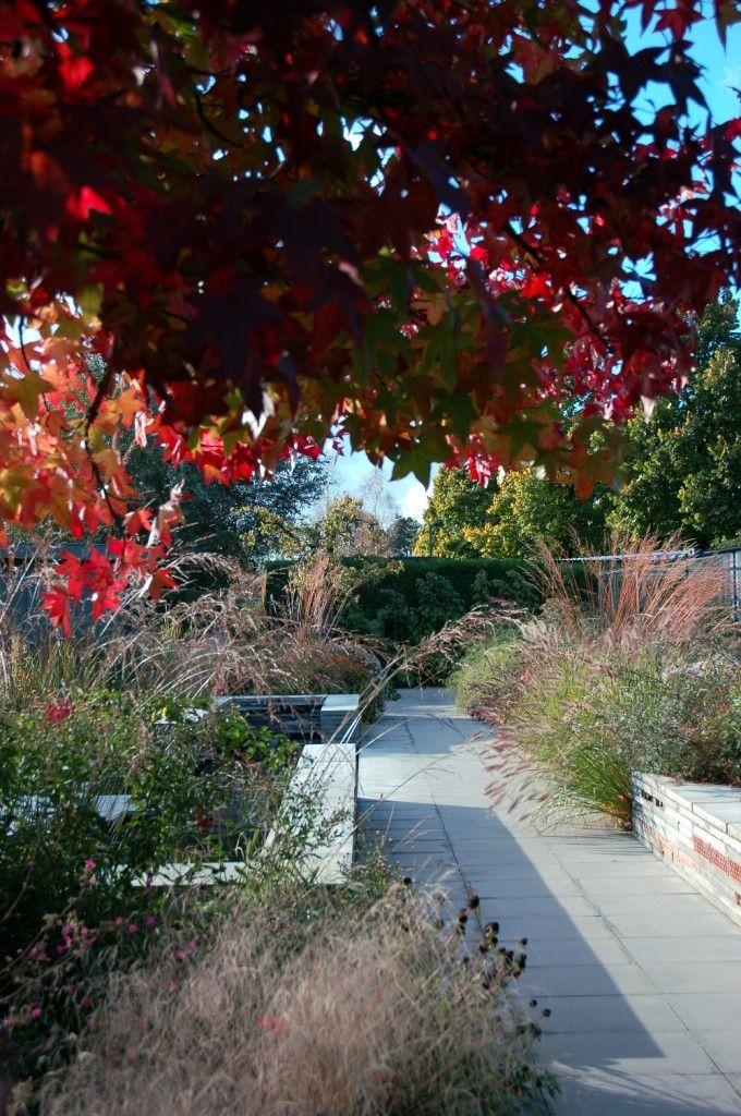 Notes on Contemporary Garden: Carrie Preston