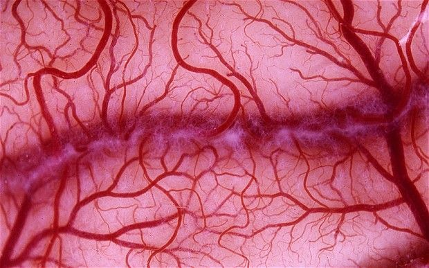 Growing artificial blood vessels from stem cells