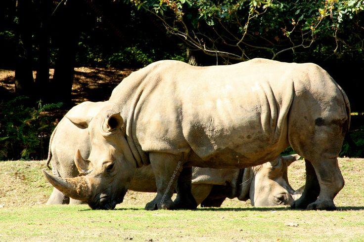 Animaux  * Rhinocéros http://www.commeuninstant.com/galerie/faune-et-flore/animaux/jardin-animalier