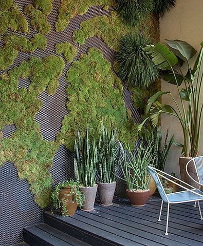 moss wall & potted plants - love them combined!