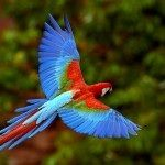 Colorful and beautiful parrot
