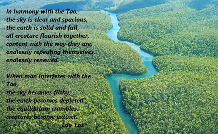 Image result for quotes from tao