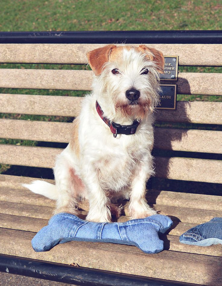 Buster with his denim handmade dog toy. Full tutorial for making these cute dog toys from old jeans complete with squeakers.