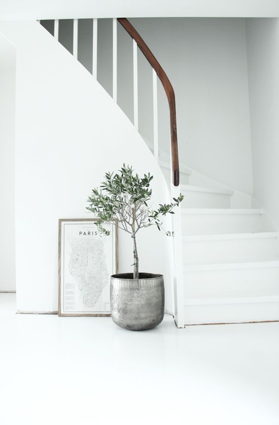 Zen... Letting nature in with a beautiful potted plant. Serene, quiet, thoughtful. White Interior