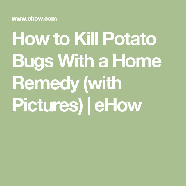 How to Kill Potato Bugs With a Home Remedy (with Pictures)   eHow