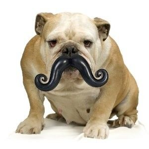 Mustache Dog Toy! Might as well be entertained while they play fetch with a ball!