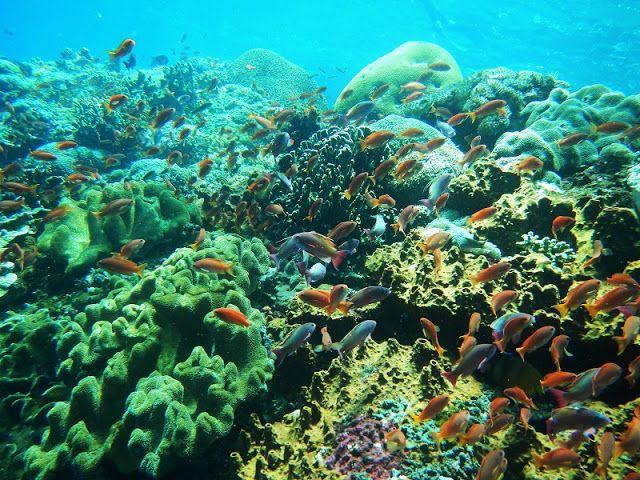新・バリの素(もと): マンタと一緒に泳ぎたい!!レンボンガン島&ヌサペニダ島シュノーケリング尽くしの1日