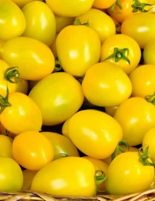 Yellow Plum - Tomato Seeds