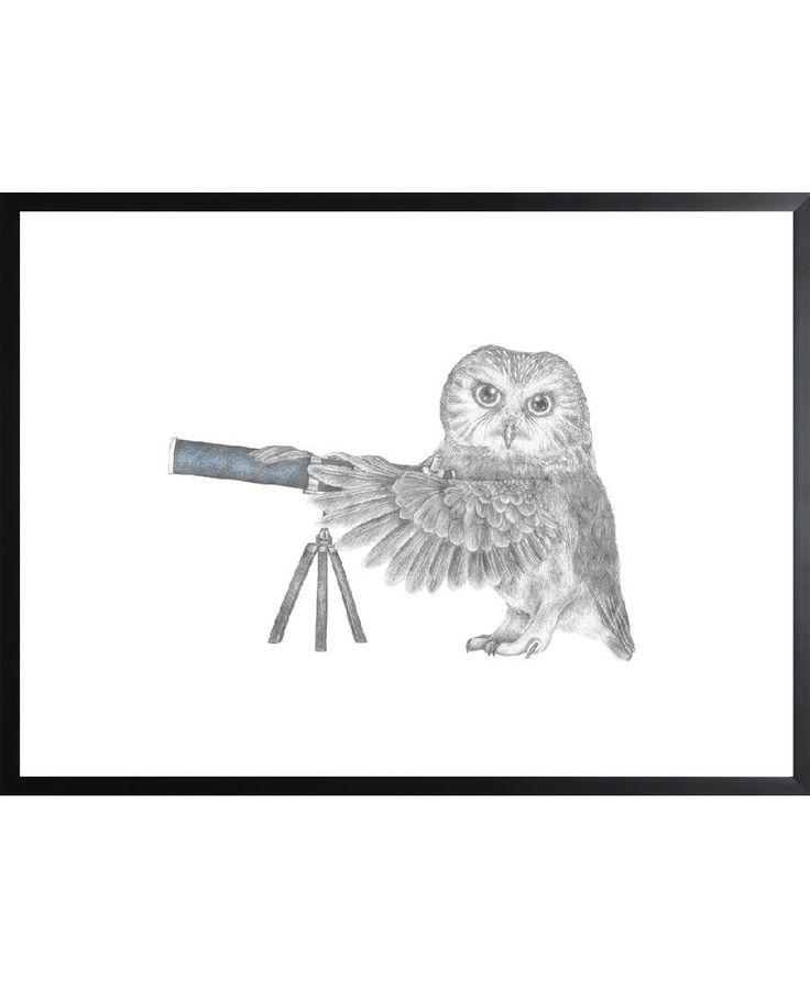 Pearl Papineau Saw Whet Owl VON Le Canot Rouge now on JUNIQE!